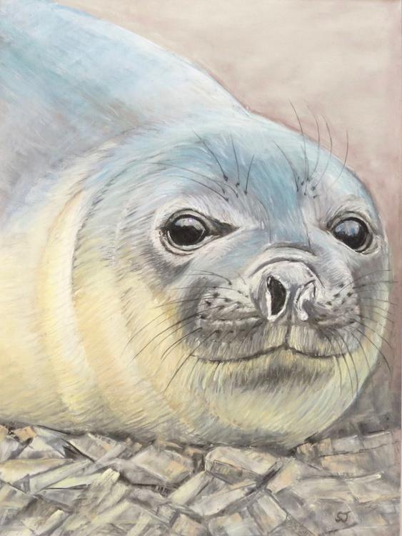 Antarctic Seal Pup - Image 0