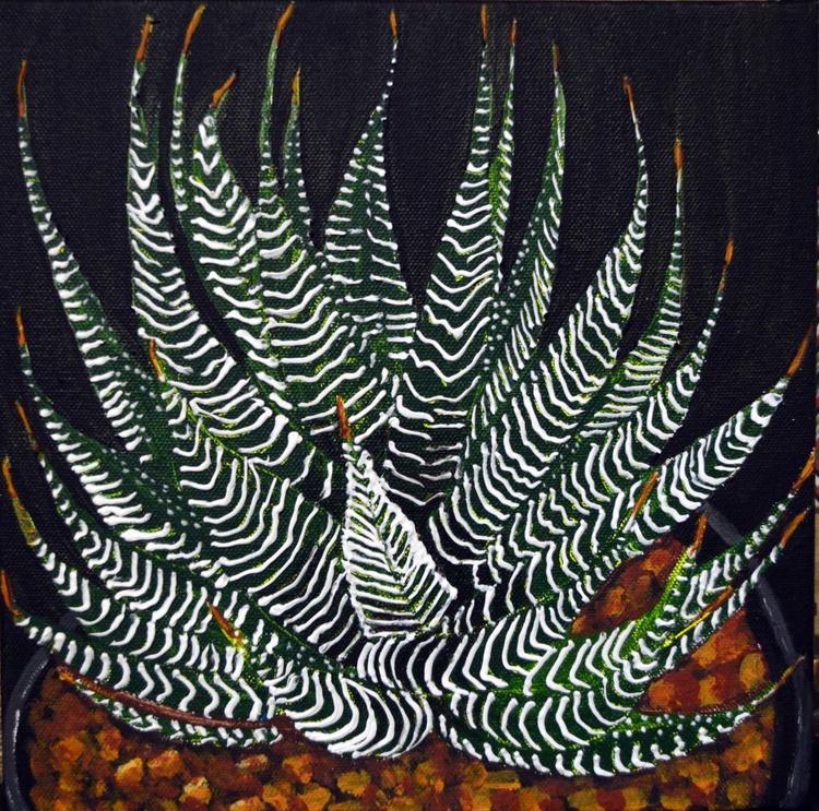 zebra succulent - Image 0