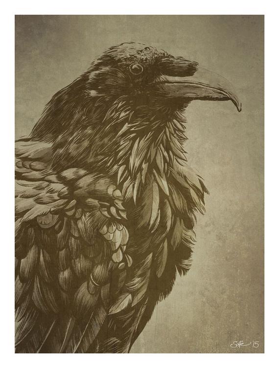Raven (Corvus corax) - Image 0