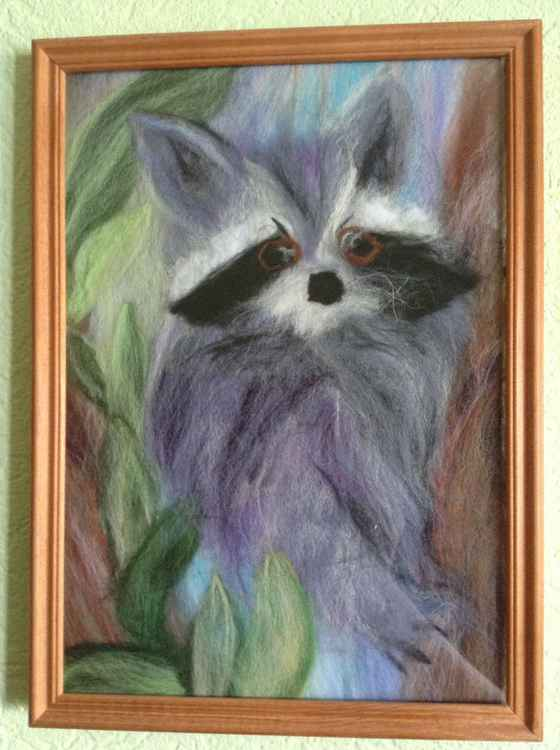 Wool  raccoon -