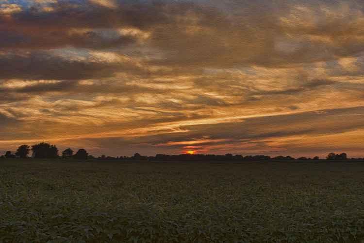 Farmland Sunset -