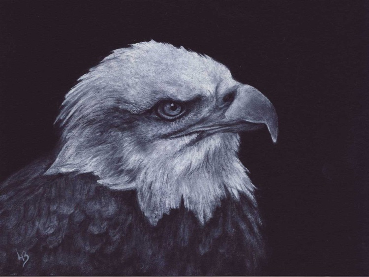 Bald Eagle - Image 0