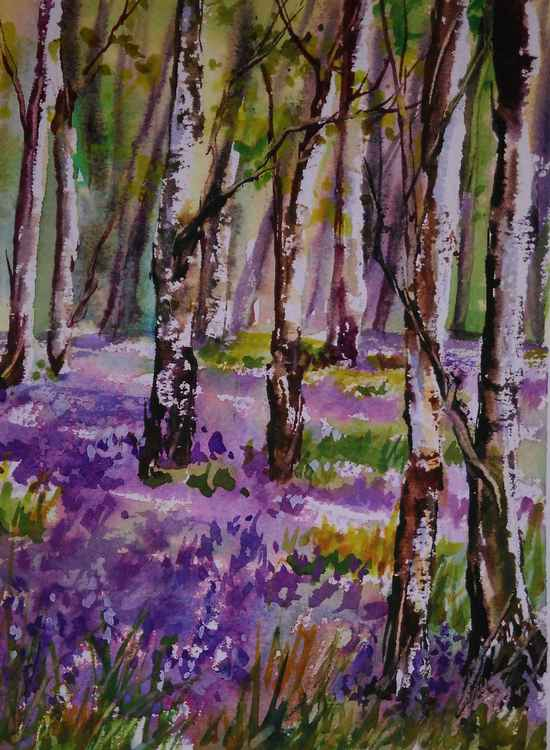 Silver Birch and Bluebells -