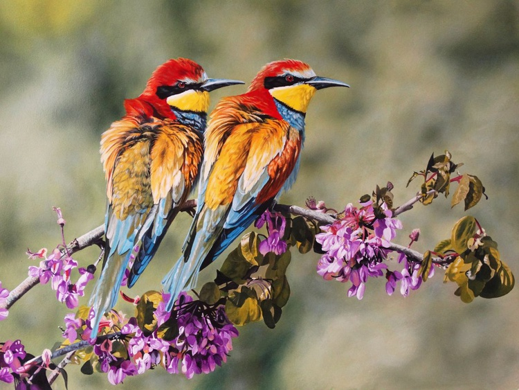 Bee Eaters - Image 0