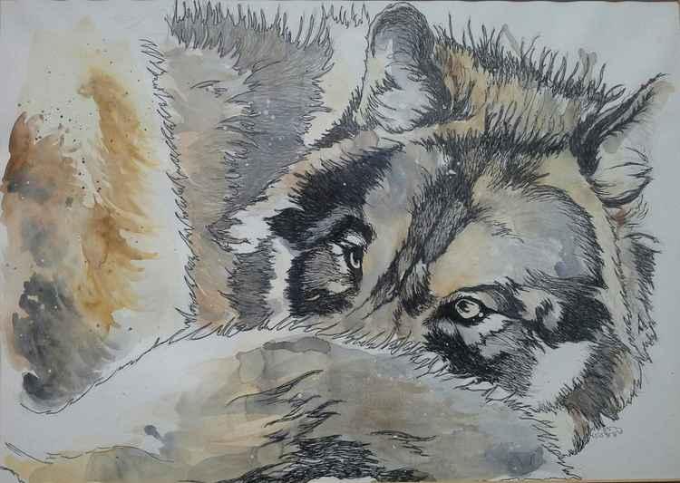 Snow Wolf -