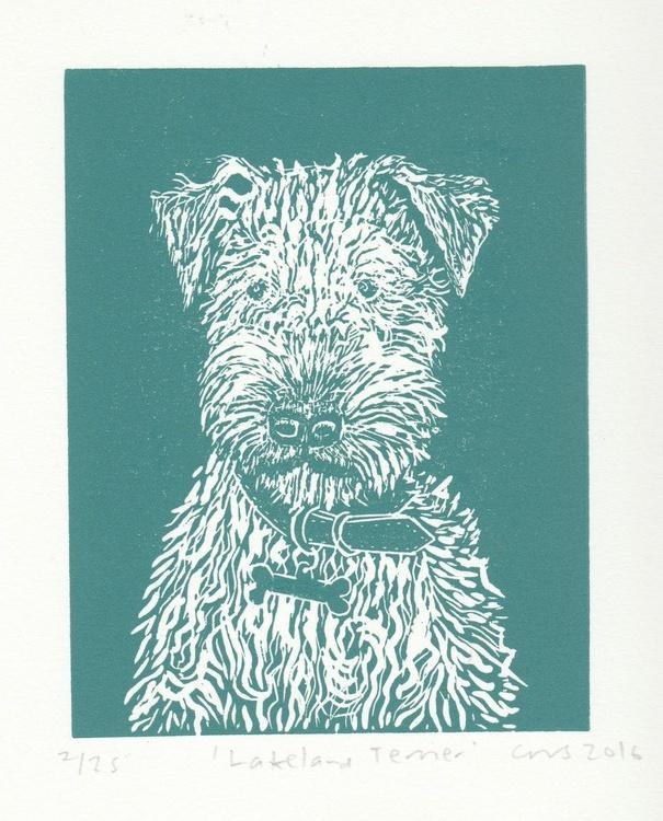 Lakeland Terrier - Image 0