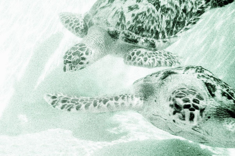 Turtle Reef (Ltd Edition of only 50 Fine Art Giclee Prints from an original photograph) - Image 0