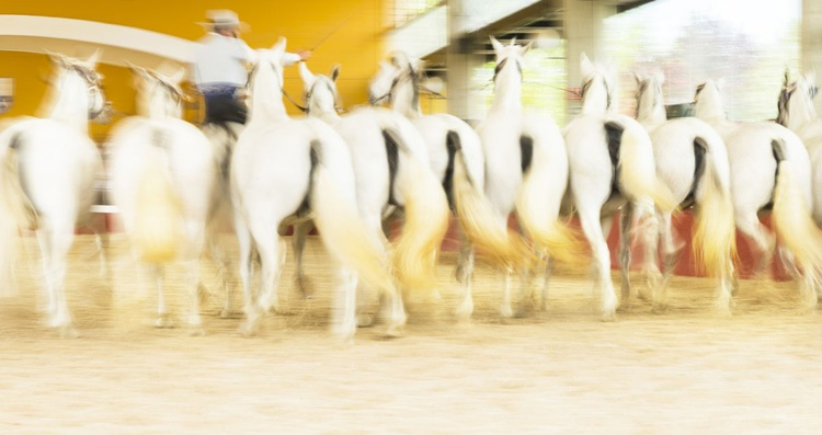 FAIRYTALE HORSES 2. - Image 0