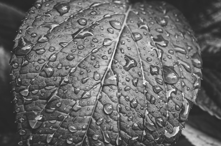 Leaves II (LIMITED EDITION OF 50 | SMALL) - Image 0