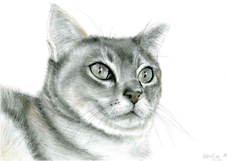 Kitty -