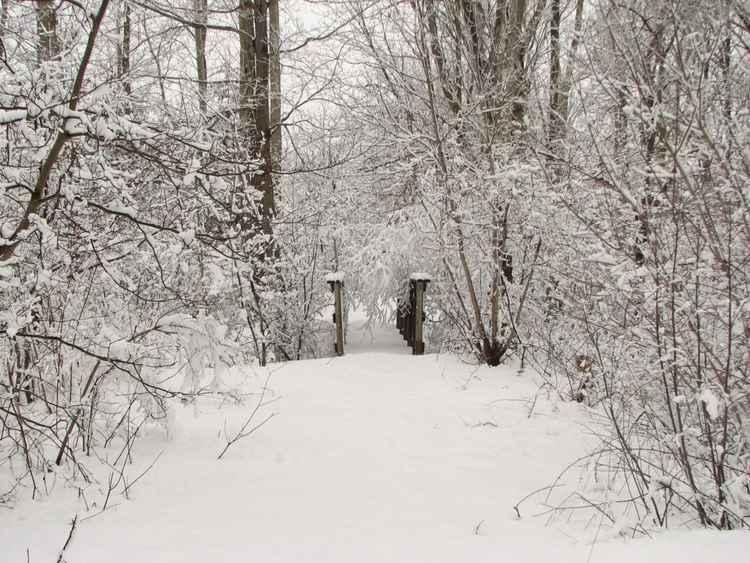 Walk Through the Woods -
