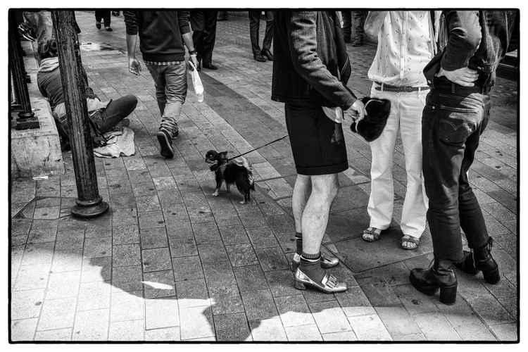 bag and dog -