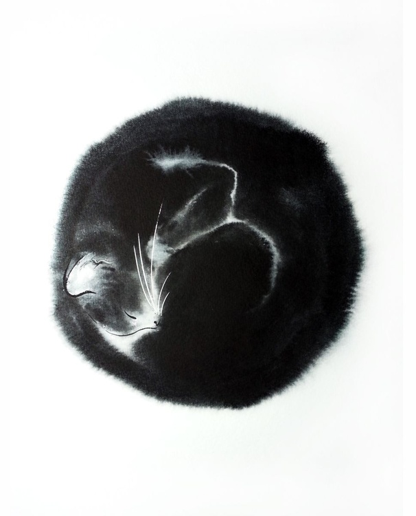 Black cat curled up in a ball - Image 0