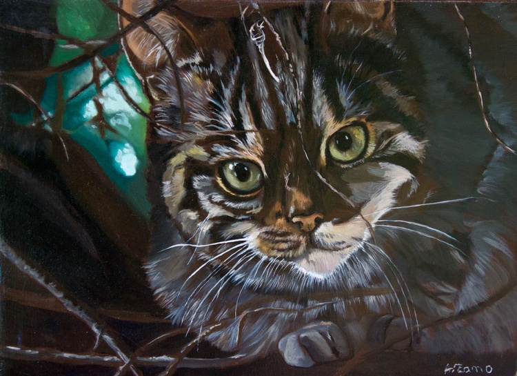 Scottish Wildcat - 50% Donation to The Haven - Image 0