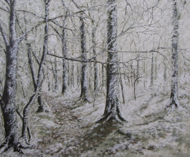 Beech Trees in snow - Image 0