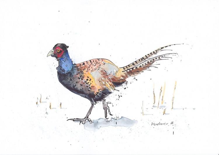 Pheasant on snow - Daily Bird #15 - Image 0