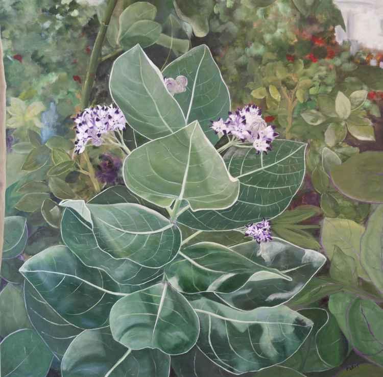 Floral Series 5 -