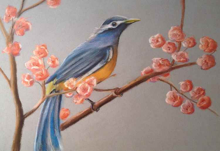 the small  bird on a blossoming branch -