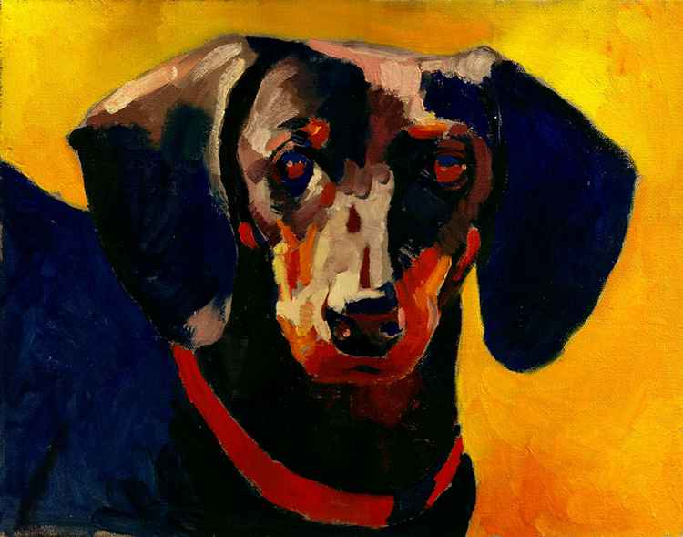 portrait of a dog -