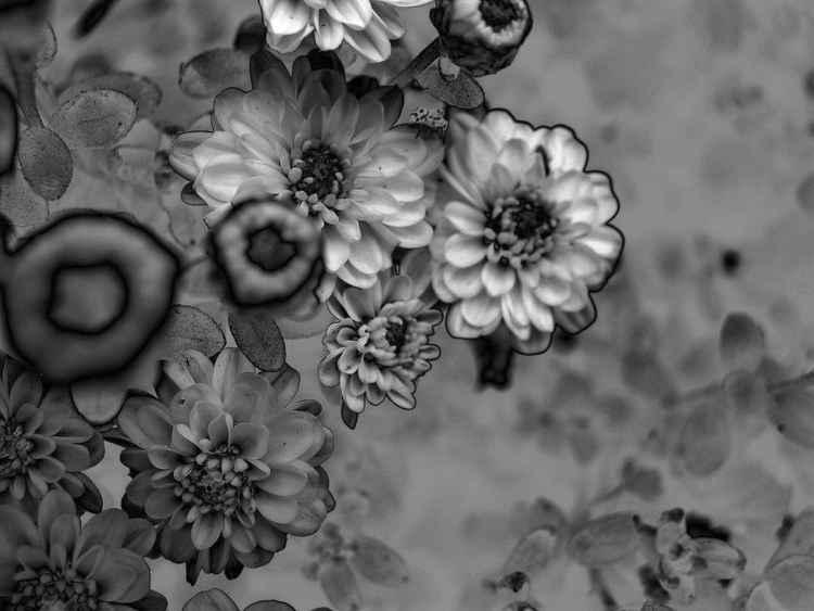 flowers revolution
