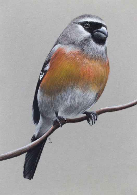 "Original pastel drawing ""Grey-headed Bullfinch"""