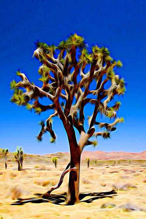 Joshua Tree Dark (30x19.875) -