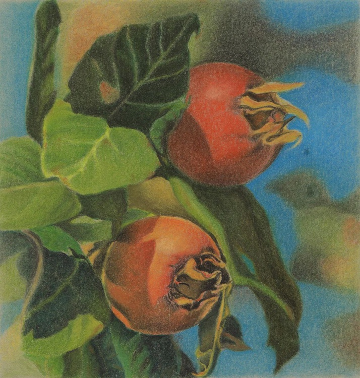 COLOUR OF SWEETNESS  ( a medlar) - Image 0