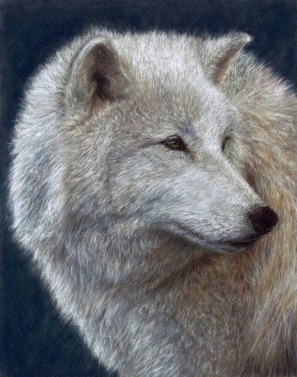 Surveillance: Arctic Wolf - Image 0