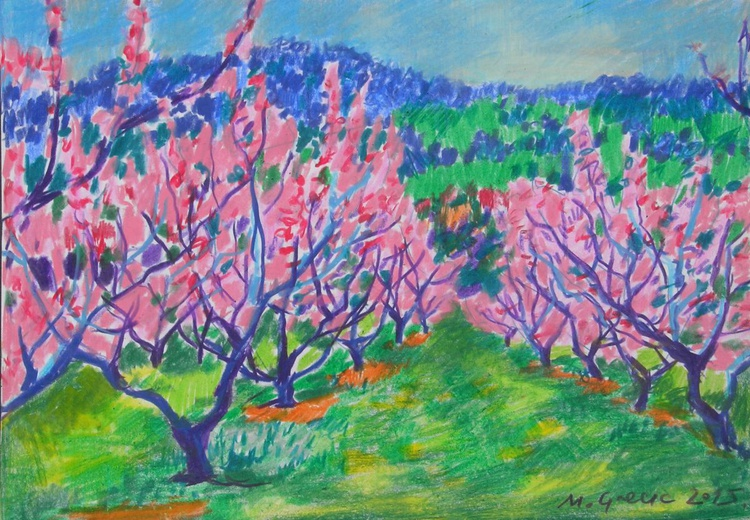 Peach orchard in bloom - Image 0