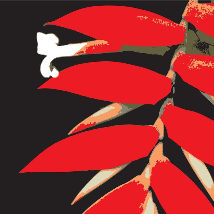 Tillandsia dyeriana bromeliad - Image 0