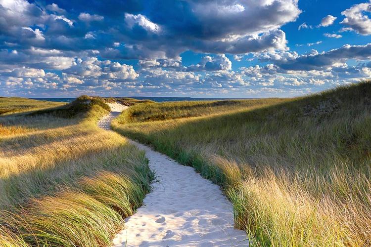 Dune Path - Image 0