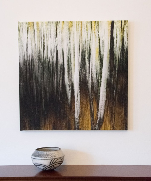 Ready to hang large canvas print of Birch Trees, Scottish Woodlands. - Image 0