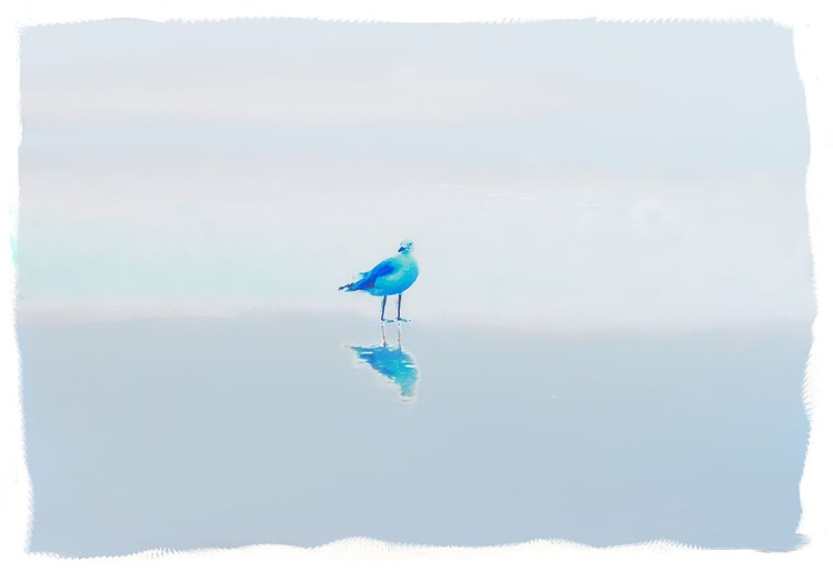 Blue Gull - Image 0