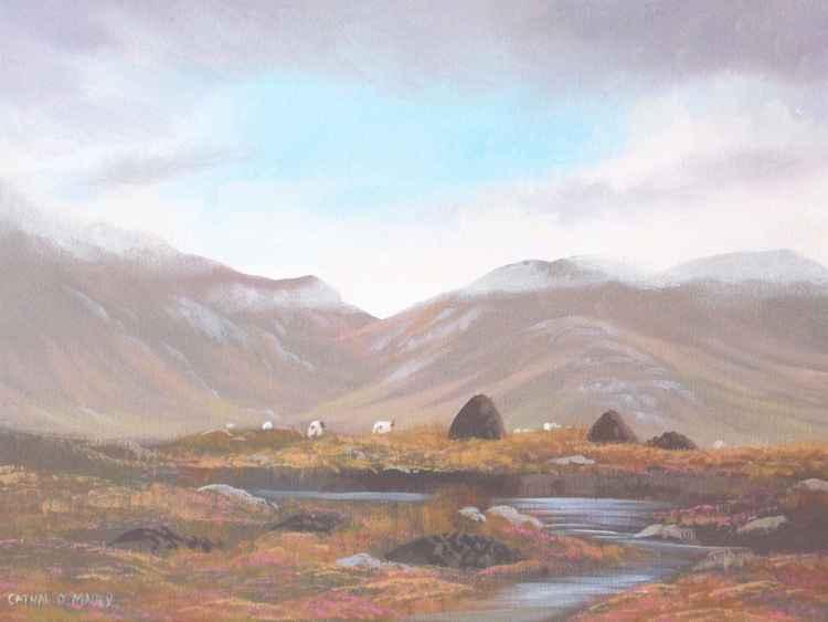 connemara bogland -