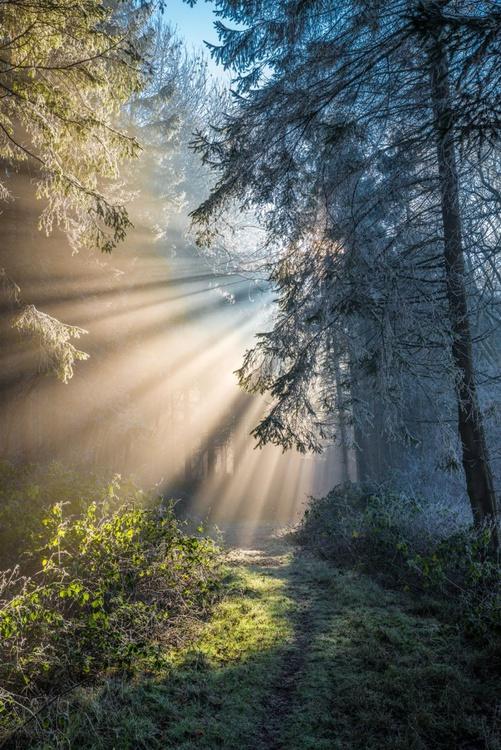 Misty Woodland - Image 0