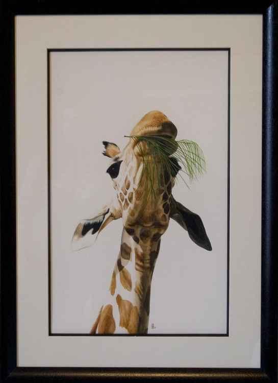 Lunchtime (giraffe)