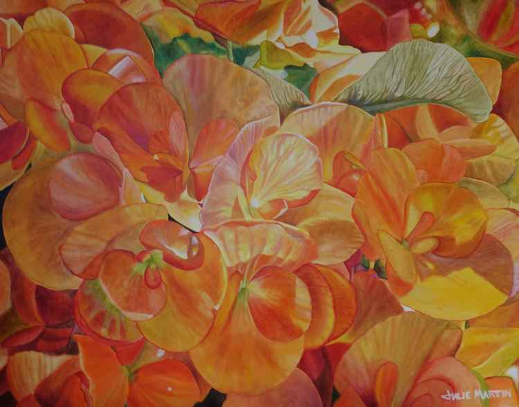 Begonia Morning -