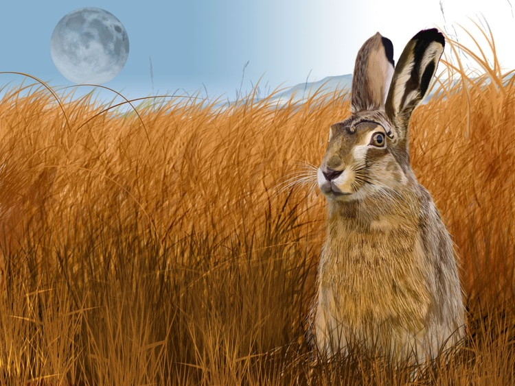Hare in Grasslands - Image 0