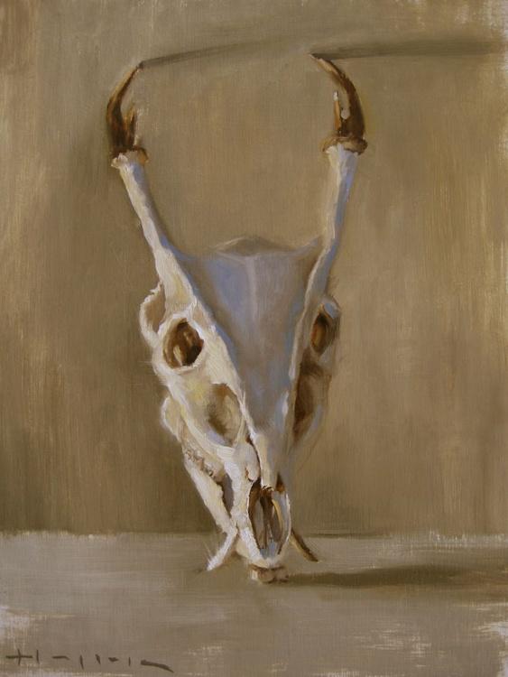 Roe Deer Skull - Image 0