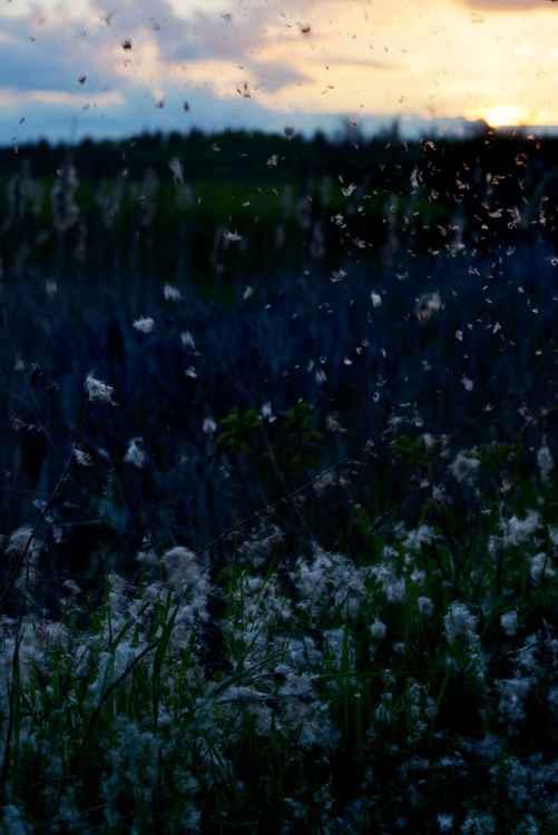 Summer Snow -