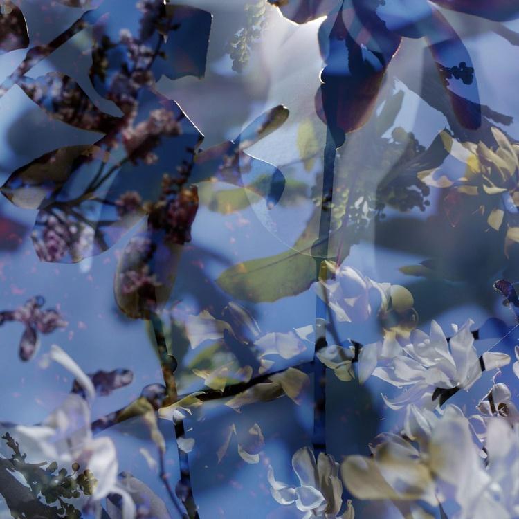 Canopy 14 fourteen - Image 0