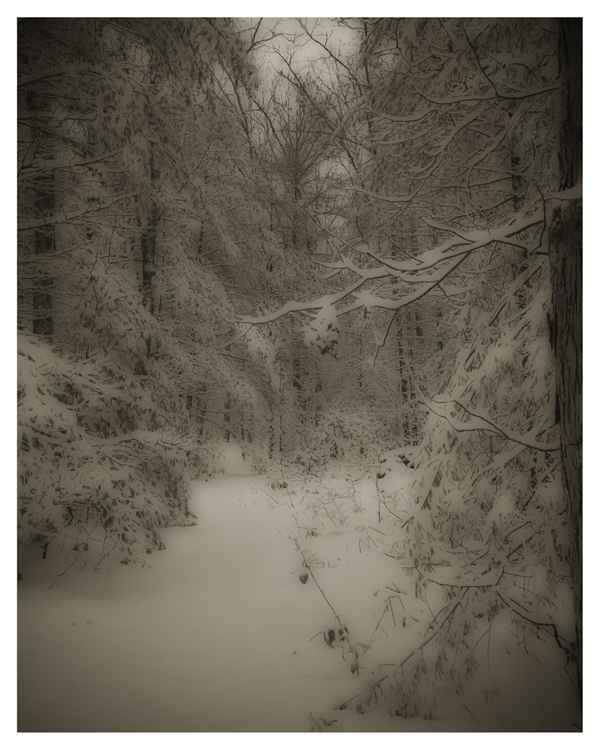 Misty Michigan Winter #11 -