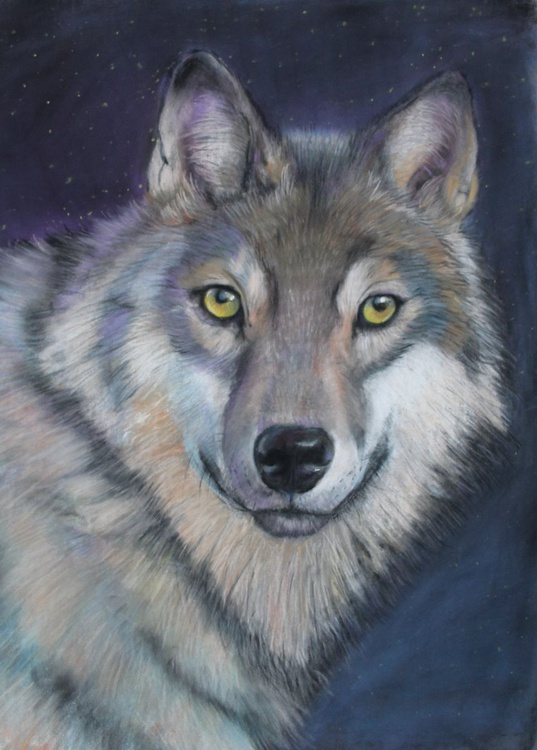 Remus, large framed pastel picture of a wolf - Image 0