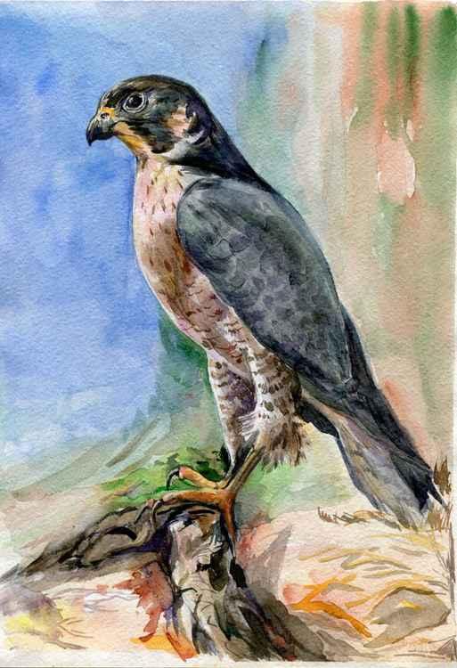 """Original watercolor """"Peregrine falcon"""" -"""