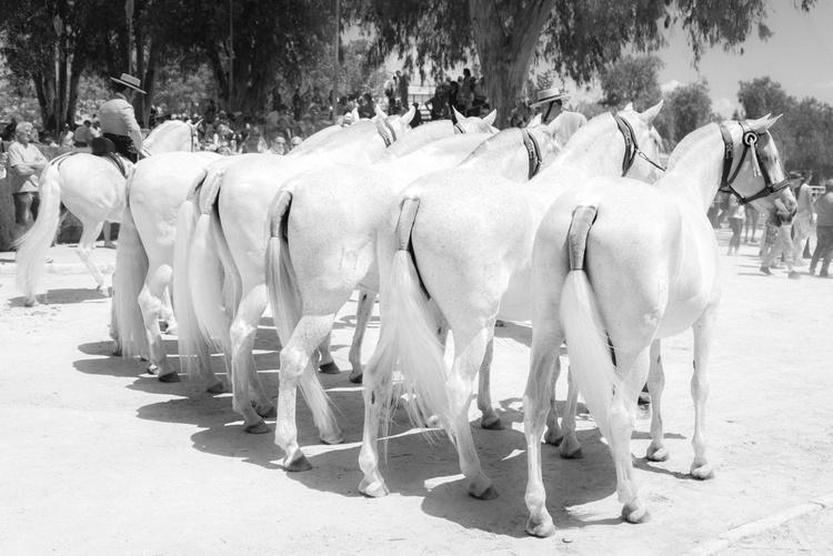 FAIRYTALE HORSES 5. - Image 0