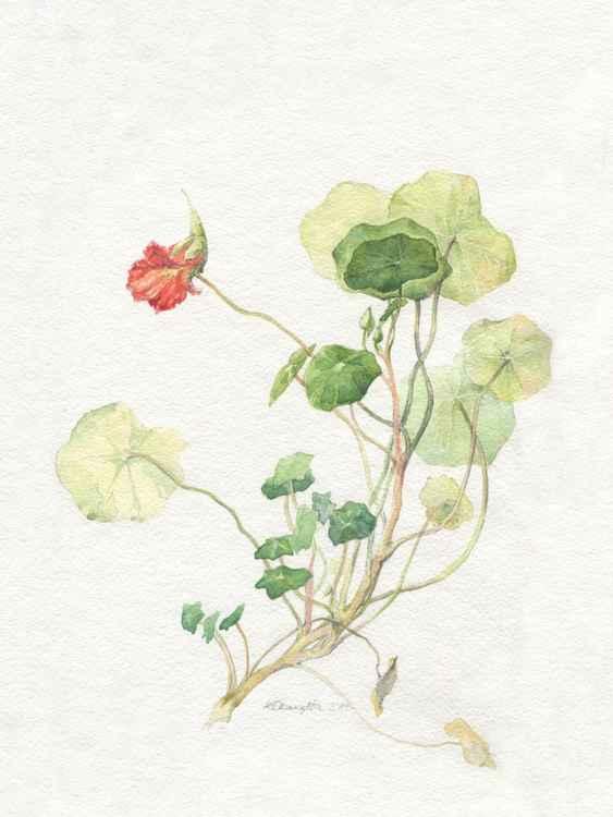Original watercolor Nasturtium -