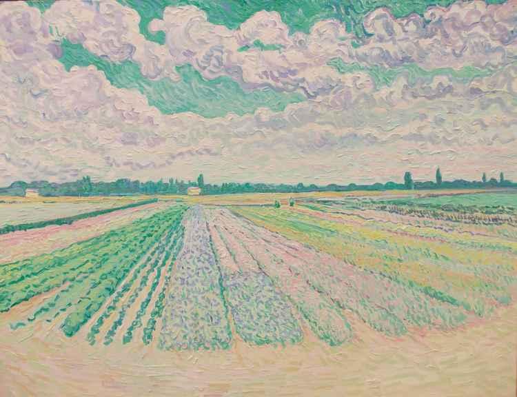 Field of flowers, Feltwell, Fenland, Norfolk -