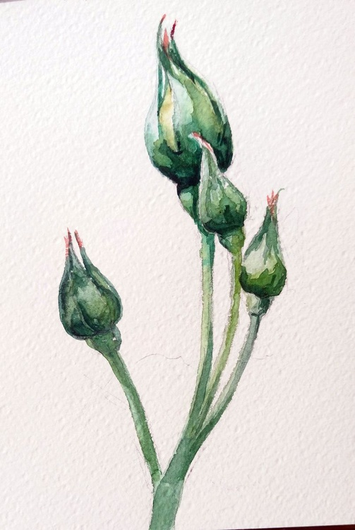 Green roses. - Image 0