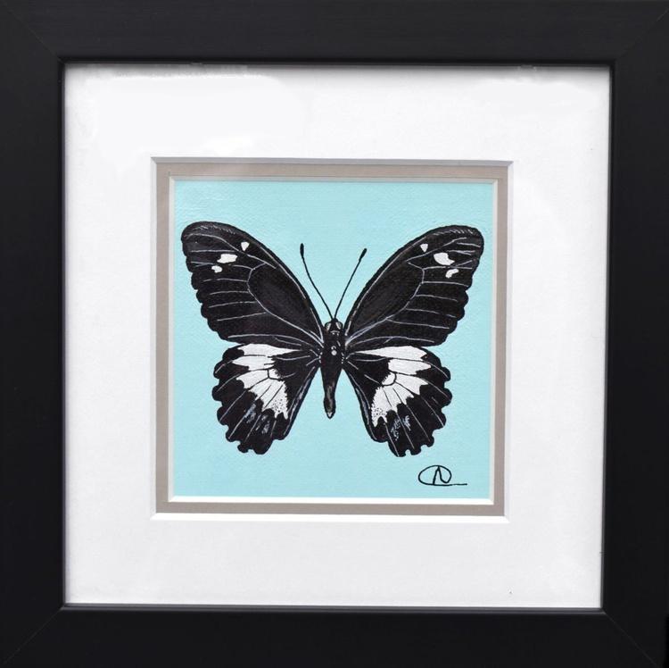 Specimen 011 - Orchard Swallowtail (Papilio aegeus) - Image 0