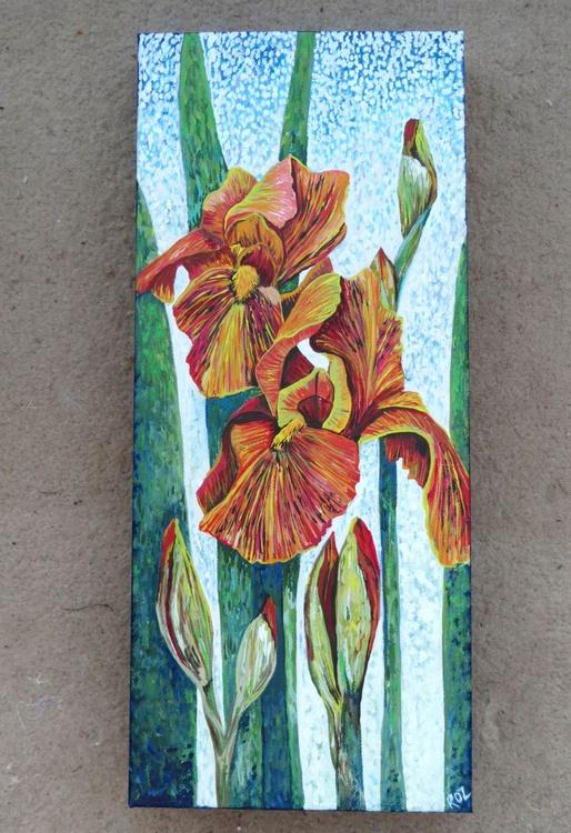 Orange Iris - Image 0